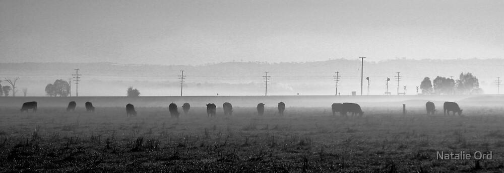Forage In The Fog by Natalie Ord