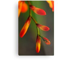 Natures Red Yellow and Green Metal Print