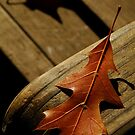 Autumn in the Park by Joe Mortelliti