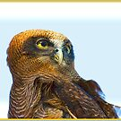 Owl Outlook by Kristine Kowitz