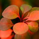 Soft Winter Colours by Joe Mortelliti