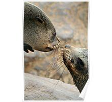 Seal Love Poster
