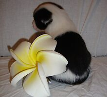 A lil puppie with a fake frangipani.  by Tiffany-Anne  Hartwig