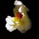 A joyfl eye to soften the heart ! by Brian Bo Mei