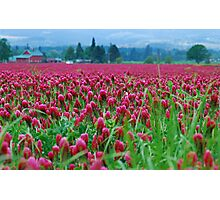 A Blanket of Crimson Covering The Land Photographic Print