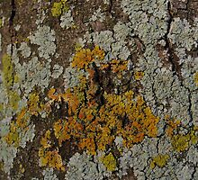 I'm Lichen this Fungus by Creativecap