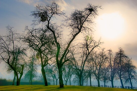 Trees on the hill by polanri