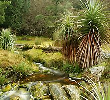 Pandani Grass at Weindorfers, Cradle Mountain by michellerena