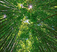 Bamboo Star by Jessica Veltri