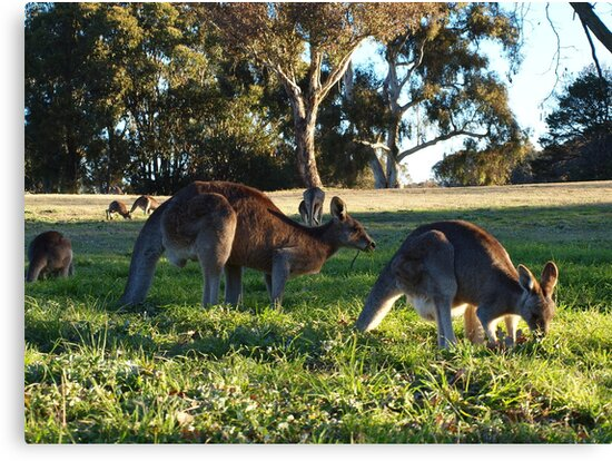 Sunday In The Park.   A C T Australia by shortshooter-Al