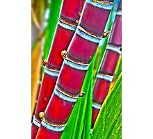 Maui's Sweet Sugar Cane Photographic Print