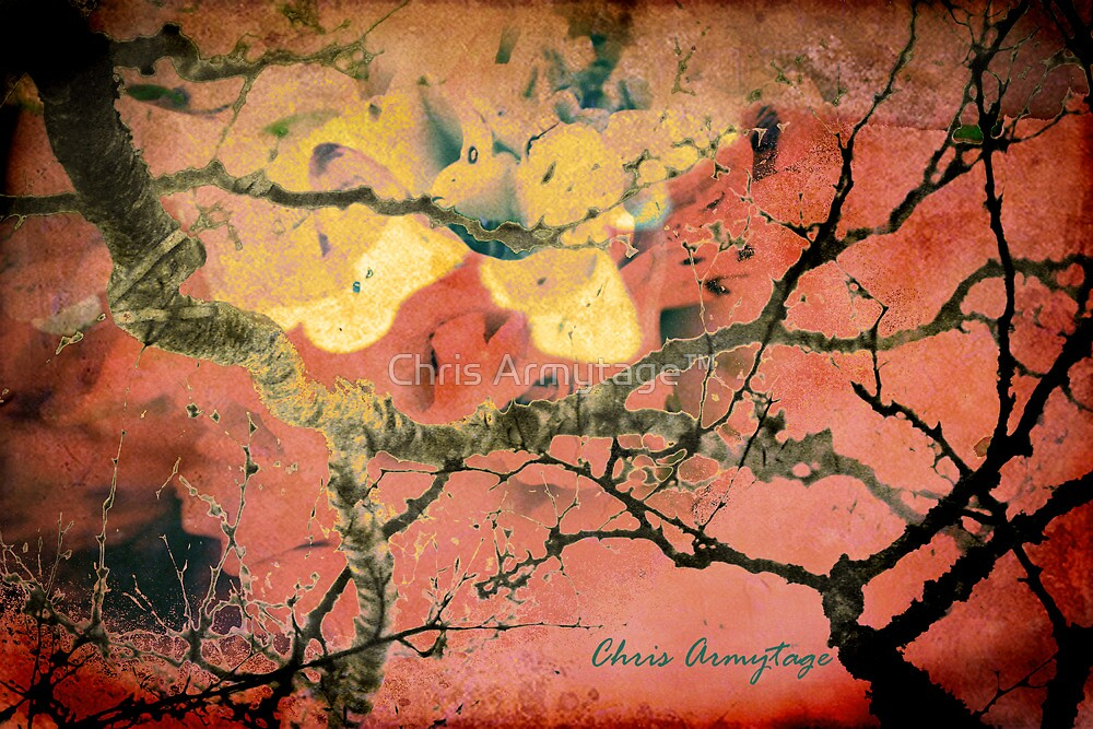 Dragon's song by Chris Armytage™