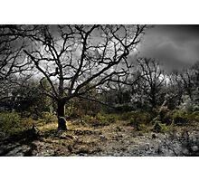 Provence Photographic Print