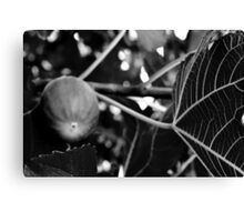 Fig Leaf B&W-Rancho Cucamonga, Ca Canvas Print