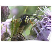 Cheeky Wasp Poster