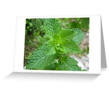 Minted Greeting Card