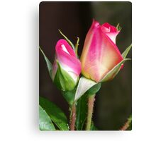 Two Rose Buds Canvas Print
