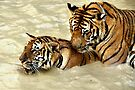 2 Tigers at Play by Carole-Anne