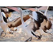 Pelican Dinner Photographic Print
