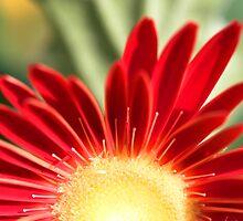 Floral Sunrise by John Murray