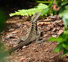 Lizard Hiding by voir