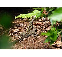 Lizard Hiding Photographic Print