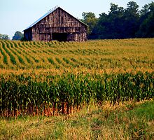 summer barn - central kentucky by John Carey