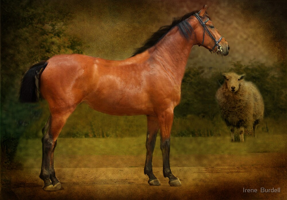 The  Race Horse. (TB X Polish Warmblood ) by Irene  Burdell