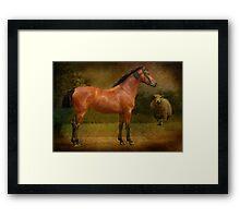 The  Race Horse. (TB X Polish Warmblood ) Framed Print