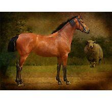 The  Race Horse. (TB X Polish Warmblood ) Photographic Print