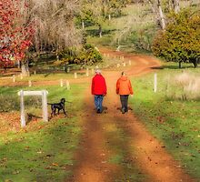Golden Valley Tree Park, Balingup, W.A. #10 by Elaine Teague