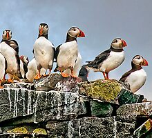 Puffins Rock by Tarrby
