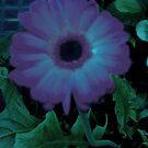 Esther flower by Lilykoli