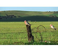 Fence sitters.. Photographic Print