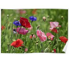 Poppies, As Is Poster