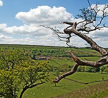 Wycoller Country Park by photomusdigital