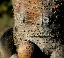 Wood Face Pandana © Vicki Ferrari by Vicki Ferrari