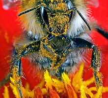 Buzz off by kdwendorf
