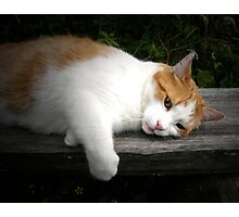 Cat on a hot wooden bench Photographic Print