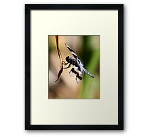 Skimmer at the End of His Perch Framed Print