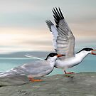 Common Tern by Walter Colvin