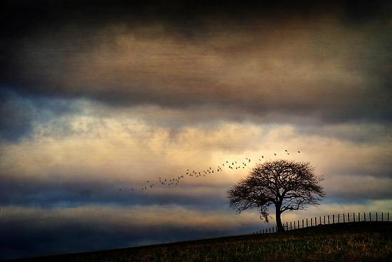 Texture Landscape by David Mould