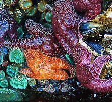 Sea Life in a Tidal Pool by Tori Snow