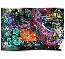 Sea Life in a Tidal Pool Poster