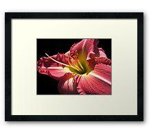 Cherry Lily © Framed Print