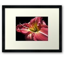 Cherry Lily © Framed Print