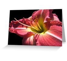 Cherry Lily © Greeting Card