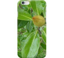 Magnolia - before the Majesty iPhone Case/Skin