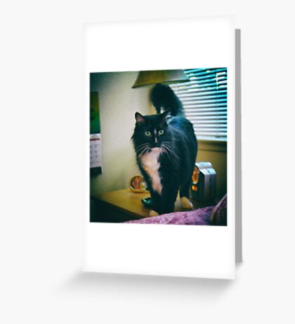 Curious cat Greeting Card