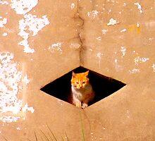 Diamond Kitty by AlbertStewart